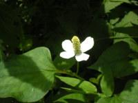 Adumaya_119