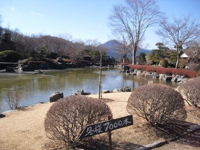 Sakurayama_036
