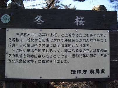 Sakurayama_046