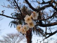 Shizuoka2010__082