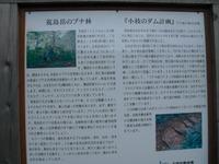 Hakusanarashima_676