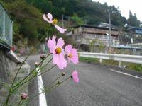 Kanna2010__195