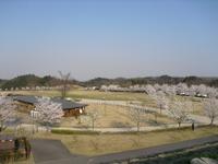 Sakura2011_052