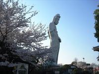 Sakura2011_059