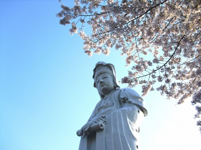 Sakura2011_0642