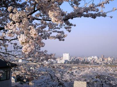 Sakura2011_130