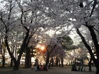 Sakura2011_145