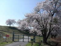 Takeyama_arigasa_239