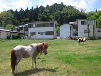Chichibu2011_130