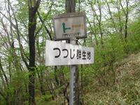 Akagitutuji_017