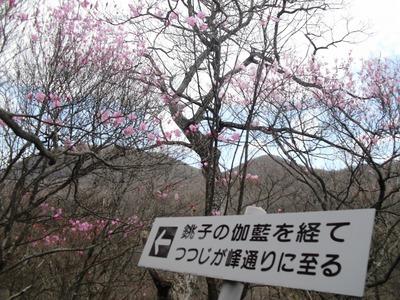 Akagitutuji_232