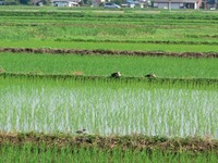 Tanigwa201107_032