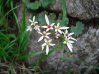 Tanigwa20110709_143