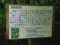 Sagurigawa_097