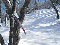 Akagikurobi2012_346