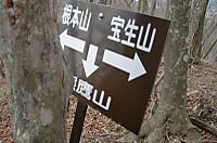 Nemoto_kumataka2012_124