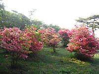 Haruna2011_076